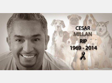 <b>Cesar Millan</b> tot? Endlich Aufklärung für die Fans! - 1257405521-cesarmillan-Y09