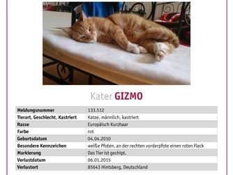 gesucht kater gizmo aus steinh ring am hintsberg tiere. Black Bedroom Furniture Sets. Home Design Ideas