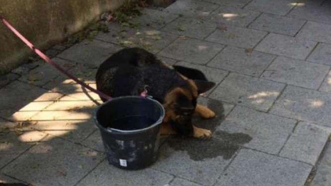 Hund leidet Hitze-Qualen - Polizei schlägt Scheibe ein