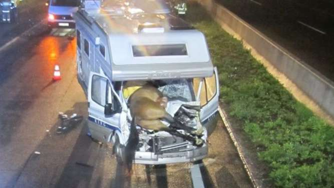 Pferde auf Autobahn: Zwei Urlauber schwer verletzt