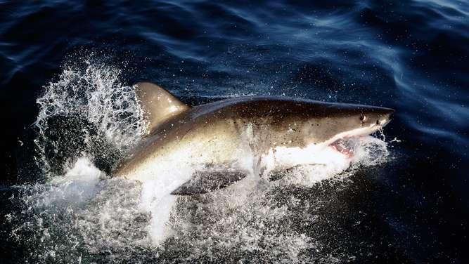 Australien: Schwimmer stirbt nach Hai-Attacke am Great Barrier Reef