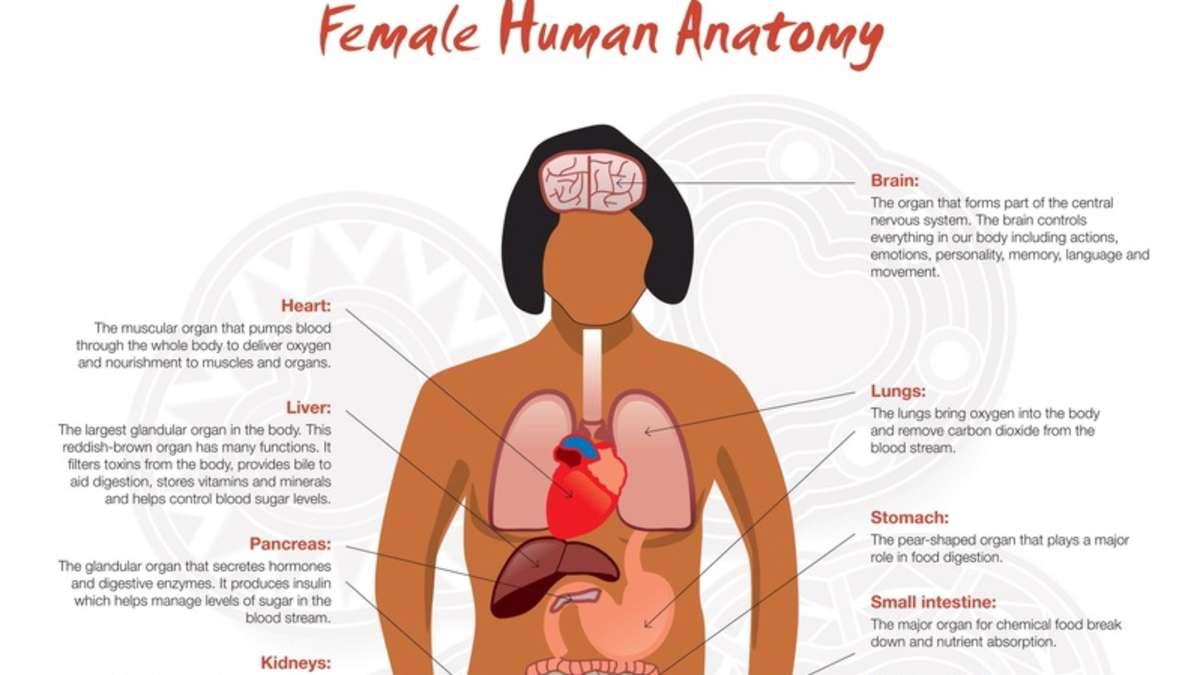Offizielles Anatomie-Poster voller Fehler | Kurios