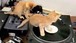 Kitty Cat DJs an den Turntables