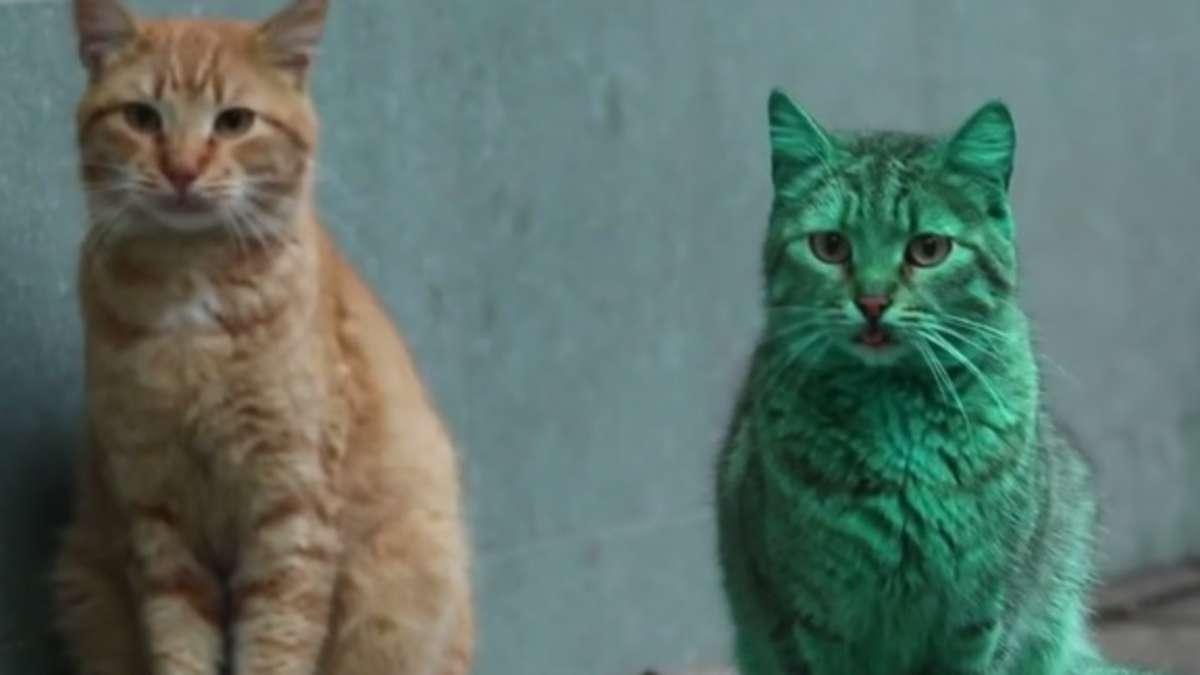 Groß Katze Färbung Seite Zeitgenössisch - Druckbare Malvorlagen ...