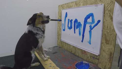 "Border-Collie ""Jumpy"" gibt Autogramm"