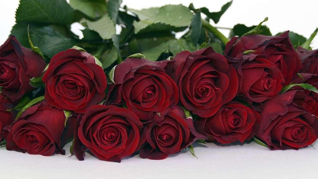 garten center rosenheim pflanzen im zeichen der liebe das sagt ihre blumenwahl ber ihre. Black Bedroom Furniture Sets. Home Design Ideas