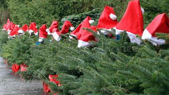 Wie Entstand Der Weihnachtsbaum.Rosenheim Exklusiv Für Unsere Leser 10 Euro Weihnachtsbaum