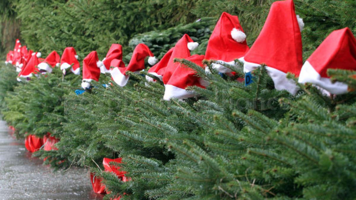 Gutschein Weihnachtsbaum.Rosenheim Exklusiv Für Unsere Leser 10 Euro Weihnachtsbaum