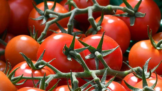 tomaten pflanzen alles was sie zu zeitpunkt und standort. Black Bedroom Furniture Sets. Home Design Ideas