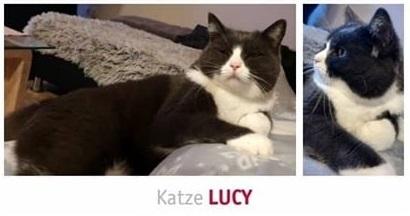 Lucy cat flasche öffnen