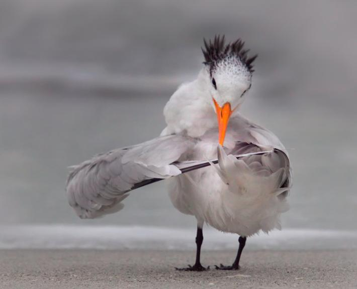 Comedy Wildlife Photo Awards 2020: Vogel